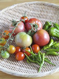 笊にのったトマト 家庭菜園の収穫の写真素材 [FYI04952928]