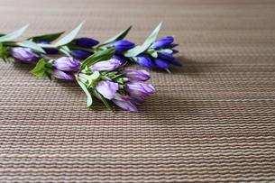 畳の上に置かれたリンドウの写真素材 [FYI04953528]