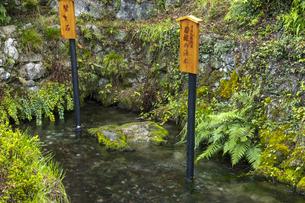 醒井地蔵川 居醒の清水の写真素材 [FYI04954569]