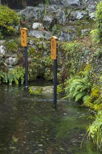 醒井地蔵川 居醒の清水の写真素材 [FYI04954570]
