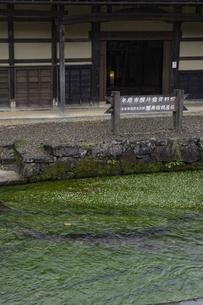 醒井地蔵川のバイカモの写真素材 [FYI04954572]
