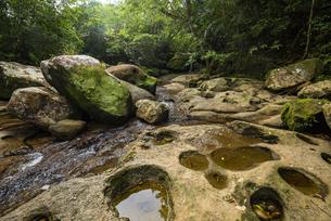 西表島の森とポットホール(甌穴)の写真素材 [FYI04955302]