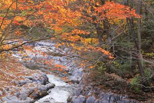 中津川渓谷の写真素材 [FYI04955456]