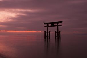 朝の白鬚神社の鳥居の写真素材 [FYI04955741]