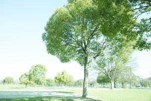 新緑の公園の写真素材 [FYI04955746]