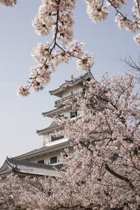春の今治城の写真素材 [FYI04955794]