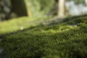 苔の写真素材 [FYI04955810]