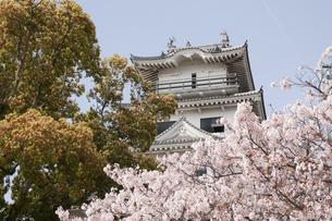 春の今治城の写真素材 [FYI04955837]