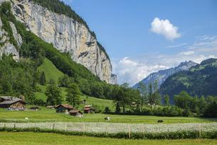 スイス、ラウターブルンネンの長閑な景色の写真素材 [FYI04955927]