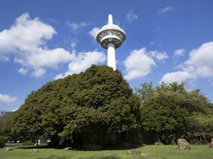 所沢航空記念公園 埼玉県の写真素材 [FYI04956255]