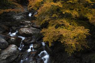 秋の渓の写真素材 [FYI04956909]