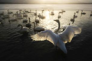 夕日に輝くの写真素材 [FYI04956921]