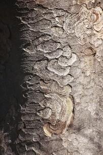 木肌模様の写真素材 [FYI04957000]