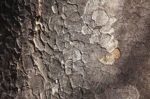 木肌模様の写真素材 [FYI04957001]