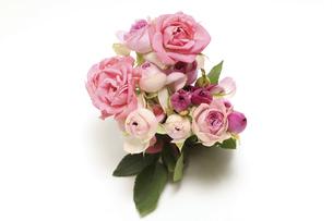 白背景の薔薇の花束の写真素材 [FYI04957455]