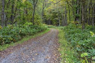 落葉に覆われた秋の山道の写真素材 [FYI04957517]