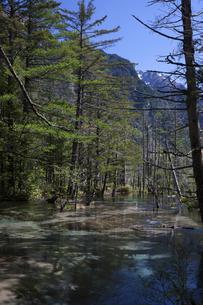 上高地の森の写真素材 [FYI04958107]