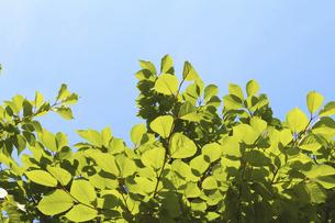 新緑 日差し エコの写真素材 [FYI04958134]
