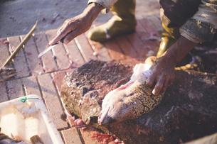 モロッコ王国 マラケシュ西エッサウィラ漁港に水揚げされたウツボを捌くの写真素材 [FYI04958657]