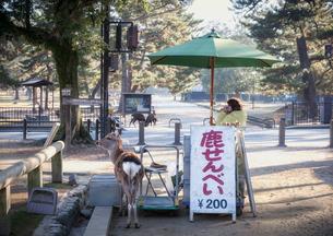 奈良公園で鹿せんべいを販売する店と鹿の写真素材 [FYI04958753]