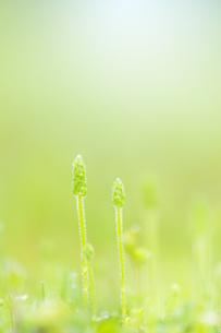 朝露のついた緑の草の写真素材 [FYI04958780]