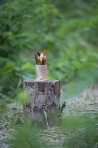 森の中のカトラリーの写真素材 [FYI04959108]