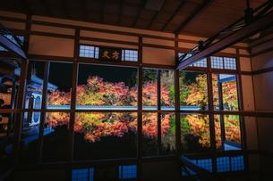 宝徳寺の夜のライトアップされた床紅葉の写真素材 [FYI04959258]