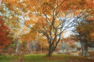 新得公園の紅葉の写真素材 [FYI04959554]