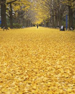 黄金色の絨毯(昭和記念公園の銀杏並木より)の写真素材 [FYI04960372]