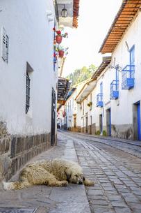 ペルー、クスコの路地で寝そべる犬の写真素材 [FYI04961240]