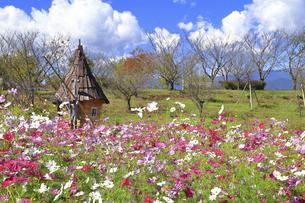 神奈川県立 花菜ガーデンのハロウィンの写真素材 [FYI04963914]