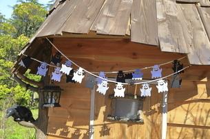 神奈川県立 花菜ガーデンのハロウィンの写真素材 [FYI04963923]